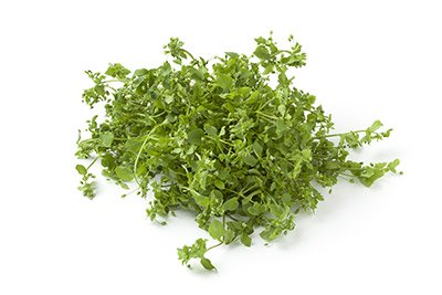 Chickweed (Herb)