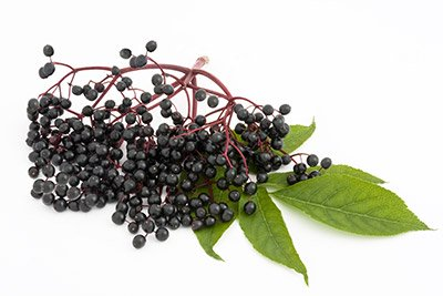 Elderberry (Berry)