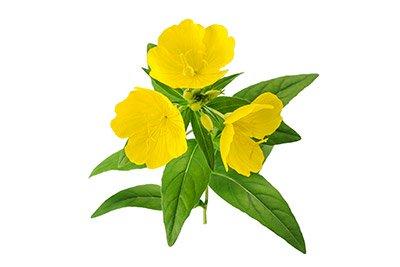 Evening primrose (Seed Oil)