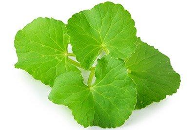 Gotu Kola (Leaf)
