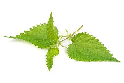 Stinging Nettle (Leaf)