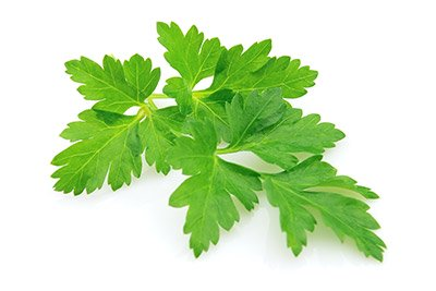 Parsley (Leaf)
