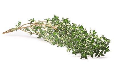 Thyme (Leaf)