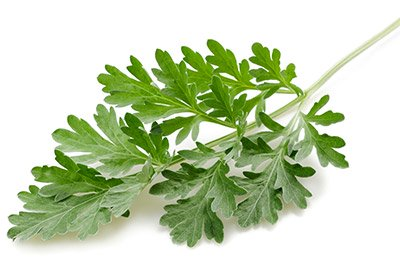 Wormwood (Herb)